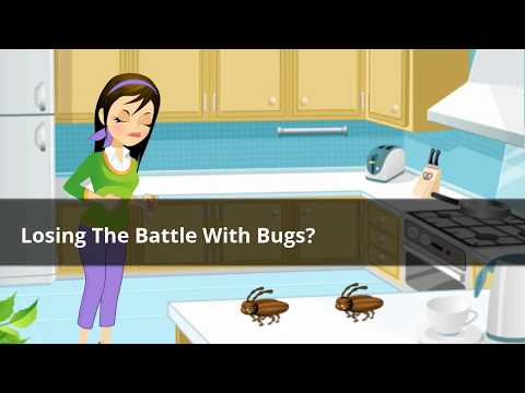 Professional Pest Control NQ Ph: 0432 527 778 – Accredited Termidor Agents Townsville