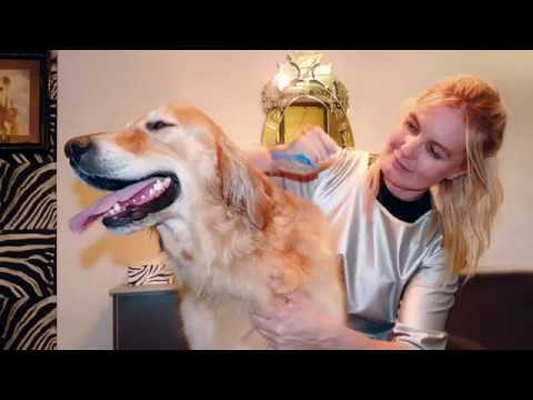 Mobile Dog Grooming Coolangatta Qld. PH Terry 0468 420 470